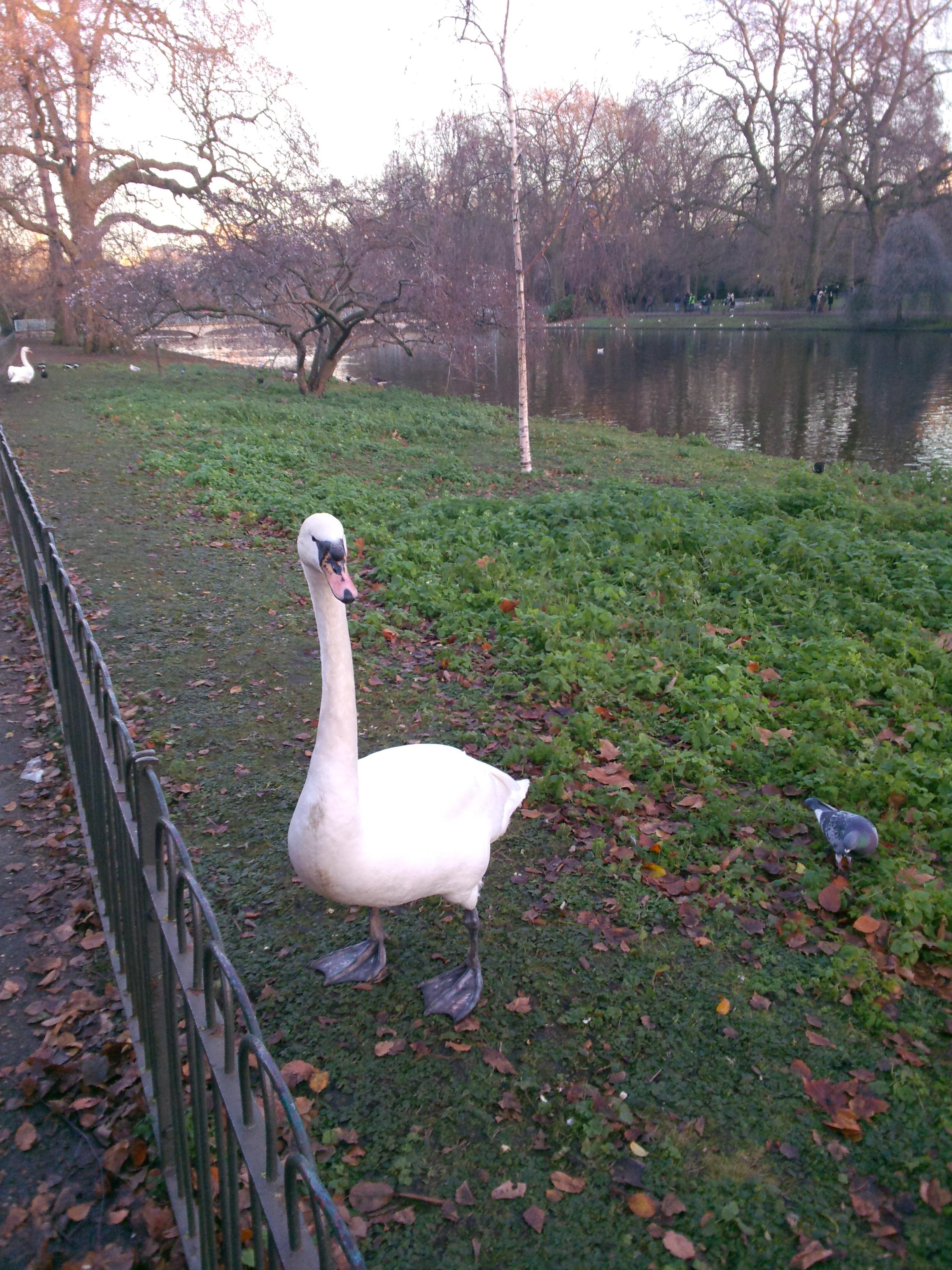 Мешканець лондонського парку