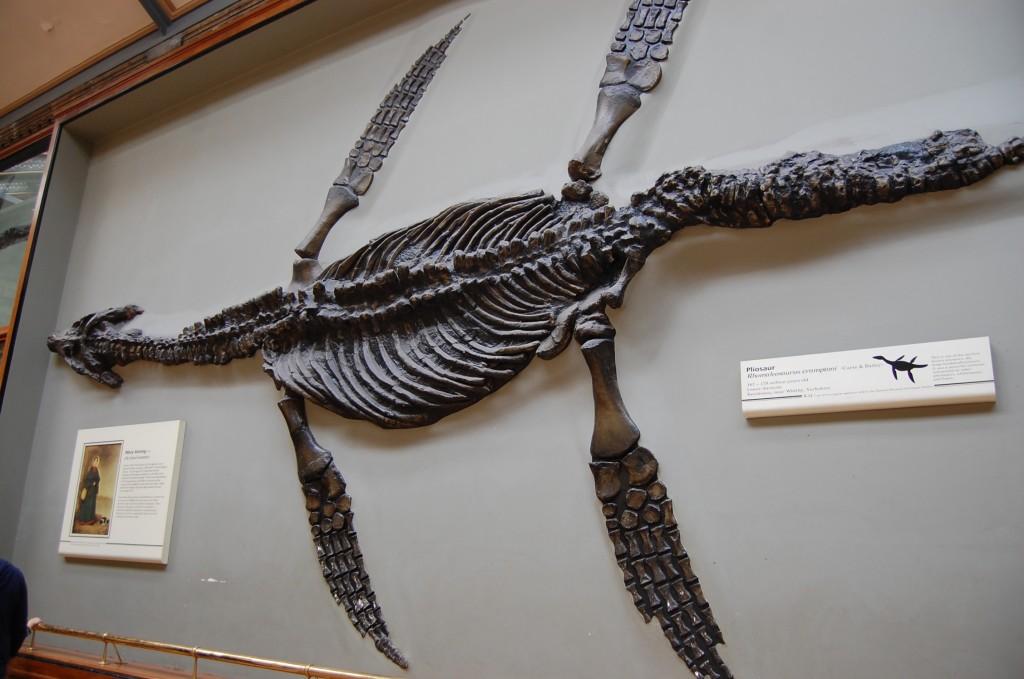 Скелет плиозавра, предположительно вот так и выглядело знаменитое лохнесское чудовище